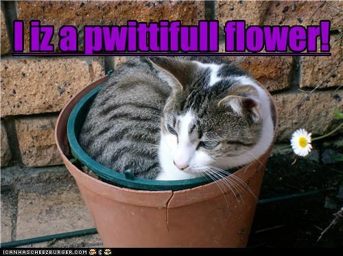 I iz a pwittifull flower!