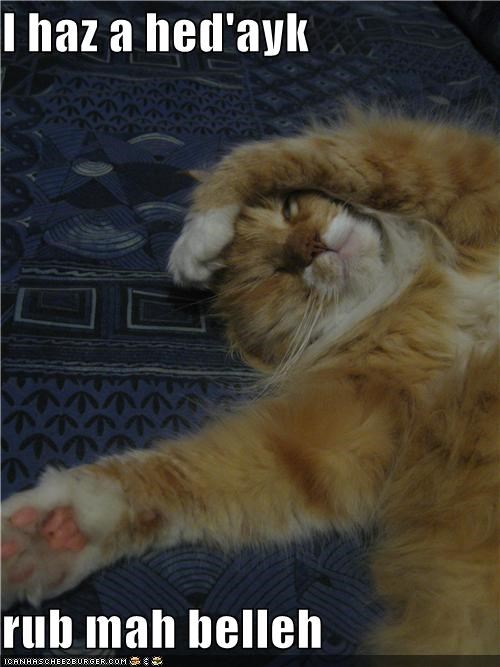 belly rubs,caption,captioned,cat,facepalm,feel better,head,headache,pain,paw,please