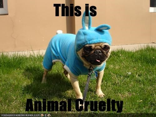 This is  Animal Cruelty