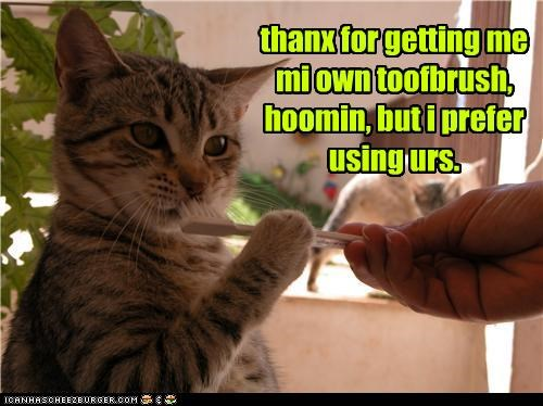 thanx for getting me mi own toofbrush, hoomin, but i prefer using urs.