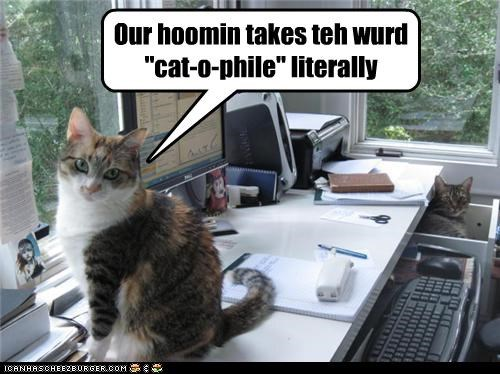 "Our hoomin takes teh wurd ""cat-o-phile"" literally"