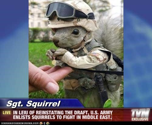 Sgt. Squirrel - IN LEIU OF REINSTATING THE DRAFT, U.S. ARMY ENLISTS SQUIRRELS TO FIGHT IN MIDDLE EAST.
