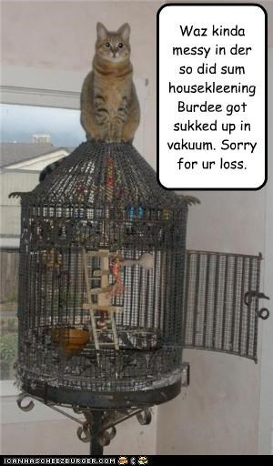 Waz kinda messy in der so did sum housekleening Burdee got sukked up in vakuum. Sorry for ur loss.