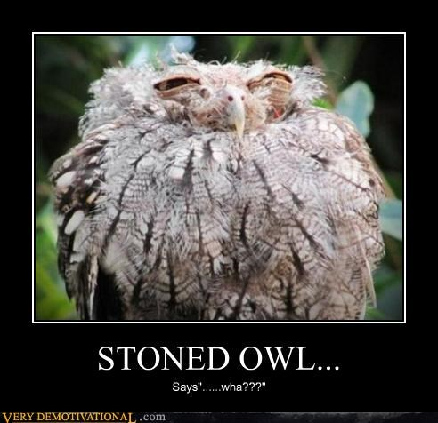 anthropomorphizing,drugs,Hall of Fame,idiots,impossible,Owl,stoned