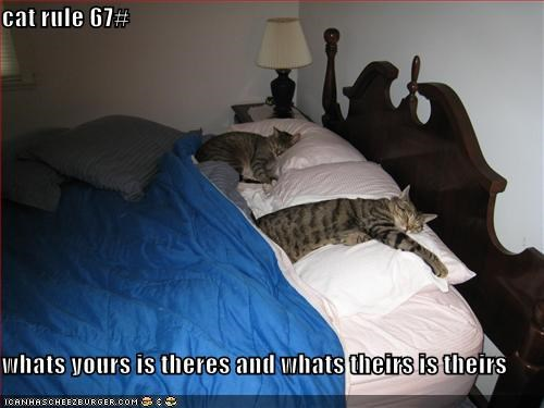 bed,caption,captioned,cat,cats own everything,comfy,ownership,Pillow,rule,sleeping,theirs,yours