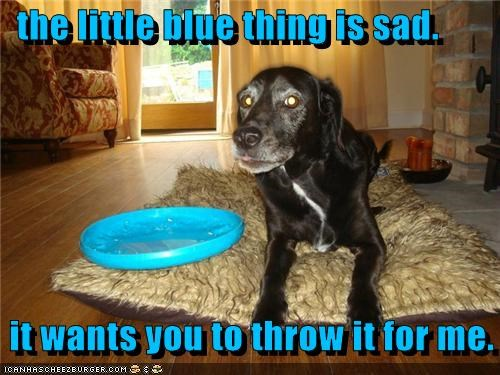 the little blue thing is sad.   it wants you to throw it for me.