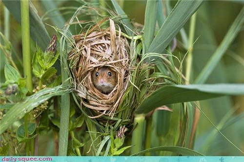 Harvest Mouse House