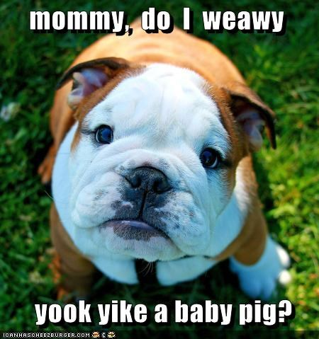 mommy,  do  I  weawy         yook yike a baby pig?