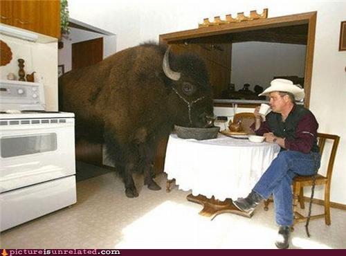 awesome,breakfast,buffalos,cowboy,food,home on the range,wtf