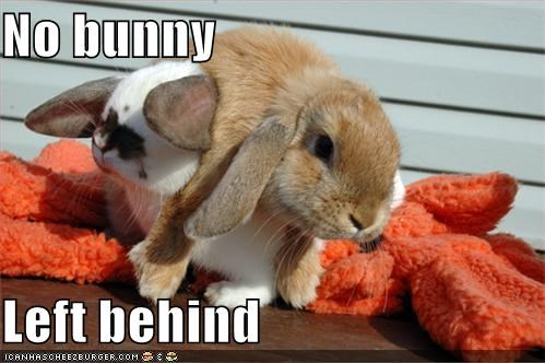 No bunny  Left behind