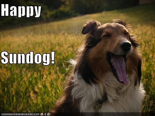 collie,field,happy,happy sundog,smiling,tongue