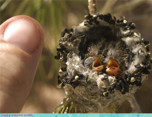 baby,bird,hummingbird