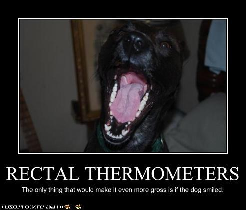 RECTAL THERMOMETERS
