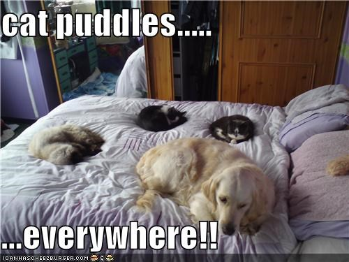 cat puddles.....  ...everywhere!!