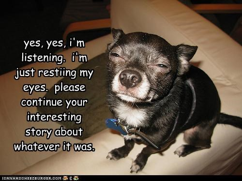 bored,chihuahua,interesting,listening,lying,not paying attention,promise,resting my eyes,story,whatever