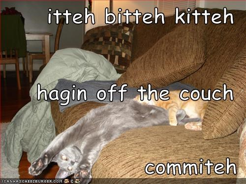 itteh bitteh kitteh hagin off the couch commiteh