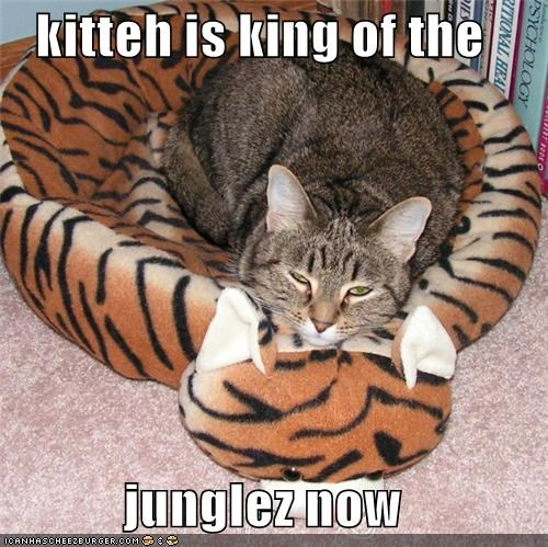 kitteh is king of the   junglez now
