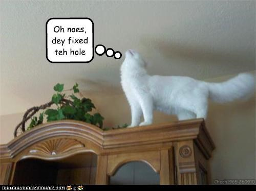 caption,captioned,cat,ceiling,ceiling cat,fixed,hole,oh no,problem