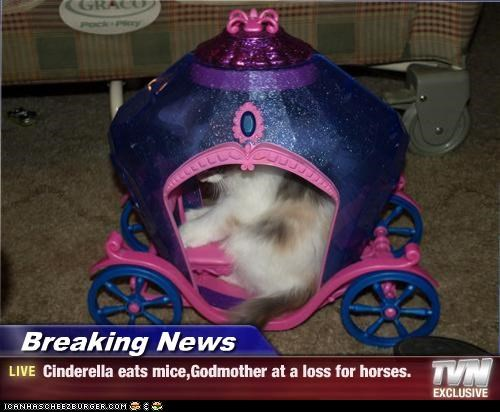 Breaking News - Cinderella eats mice,Godmother at a loss for horses.