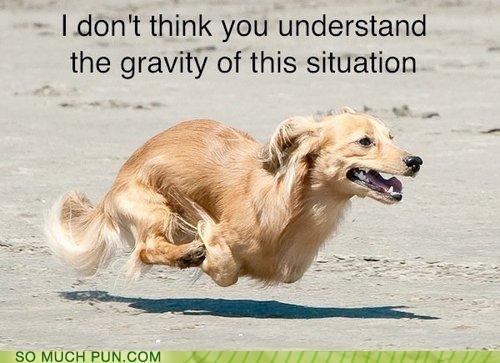 defying,dogs,equation,formula,Gravity,hoverdog,math,physics,square meters