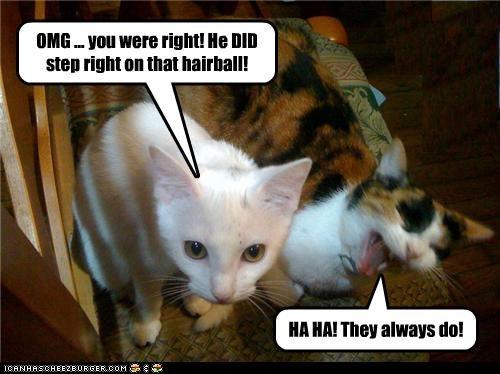 Hairball humor