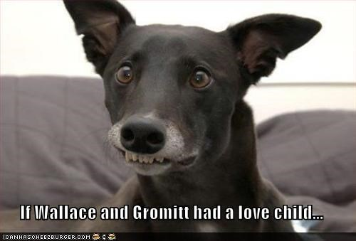 If Wallace and Gromitt had a love child...
