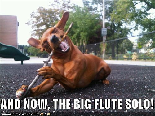 AND NOW, THE BIG FLUTE SOLO!