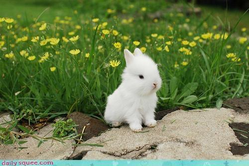 bunny,regal,stoic
