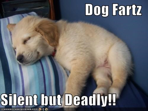 Dog Fartz  Silent but Deadly!!