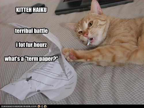Battle,caption,captioned,cat,chewing,fought,haiku,hours,kitteh,term paper,what is it