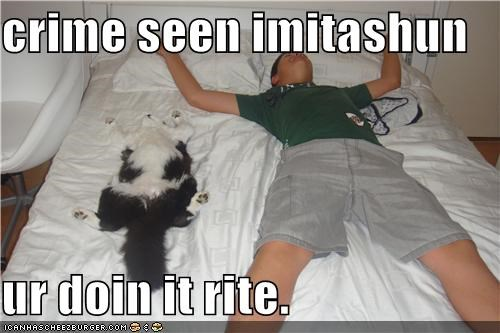 caption,captioned,cat,crime scene,doing it right,human,imitation,laying down,playing dead