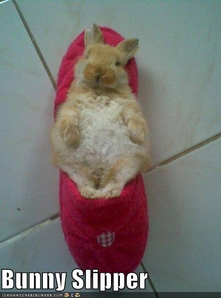 bunny,caption,captioned,comfy,cute,double meaning,literalism,sleeping,slipper