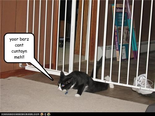 bars,cant,caption,captioned,cat,contain,escaping,jail,jailbreak,Perseverance,win