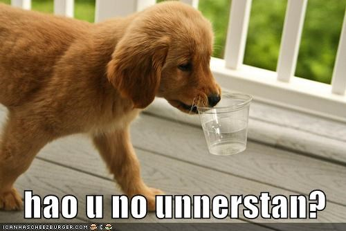 carrying,cup,cute,does not understand,golden retriever,mouth,puppy,question,refill,themed goggie week,water