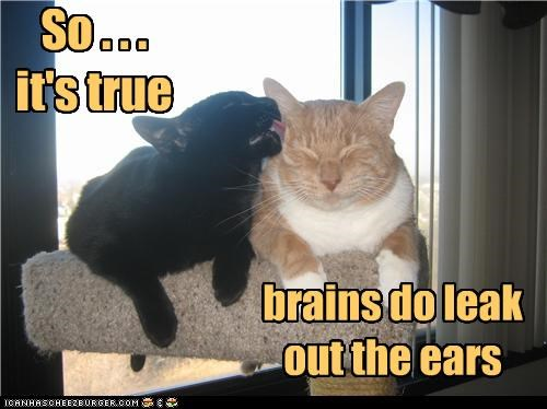 So . . . it's true  . . .  brains do leak out the ears
