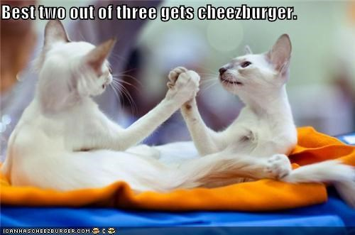 arm wrestling,best,caption,captioned,cat,Cats,cheezburger,competition,prize,two out of three