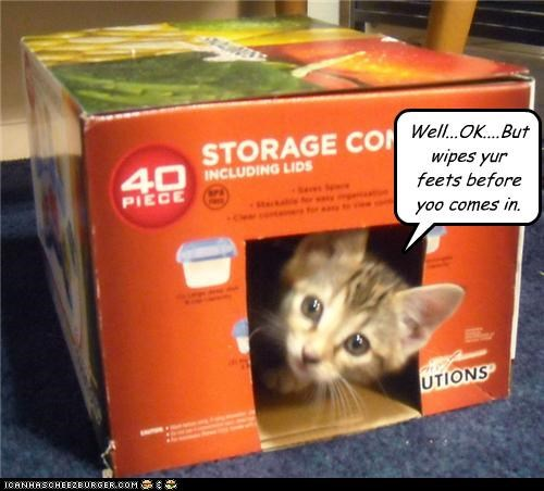access granted,box,caption,captioned,cat,coming in,guest,home,kitten,wipe your feet