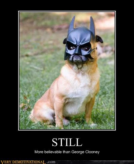 acting,batman,costume,cute,george clooney,hilarious,pug