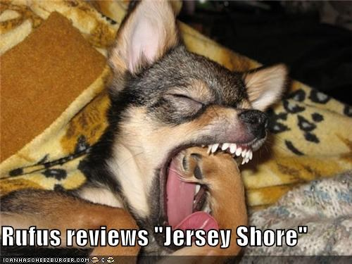 "Rufus reviews ""Jersey Shore"""