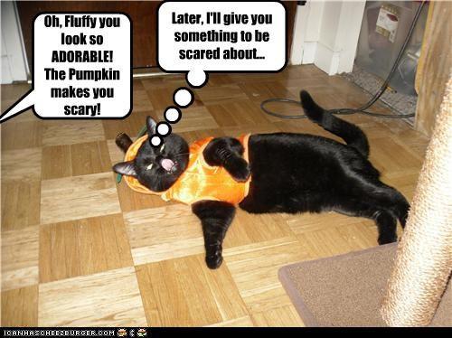 Dom't dress up the basement cat