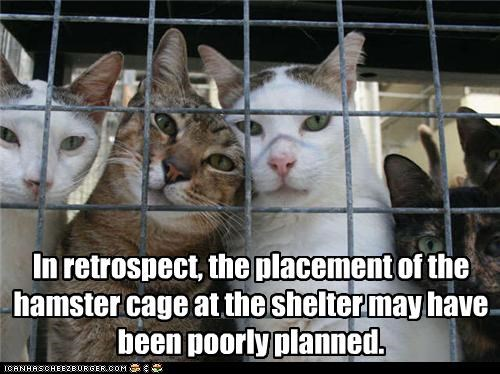 In retrospect, the placement of the hamster cage at the shelter may have been poorly planned.