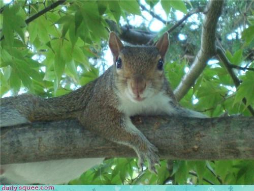 Chill Squirrel