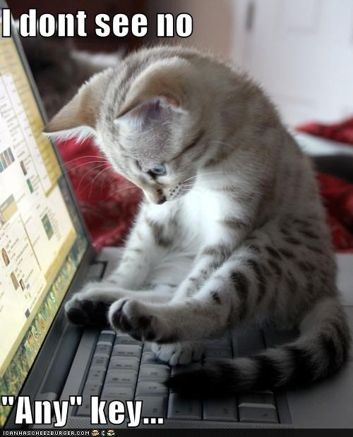 any,cant,caption,captioned,cat,computer,confused,dont,find,key,keyboard,kitten,laptop,literalism,looking,pun,see