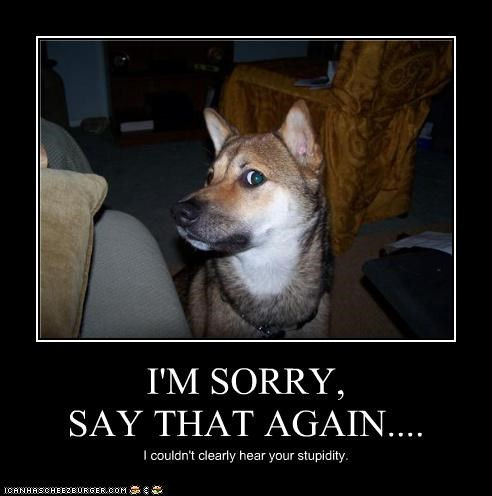 apologies,couldnt-hear-you,german shepherd,mixed breed,not sorry,say again,sorry,stupidity