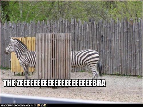 caption,captioned,funny,long,optical illusion,two,zebra,zebras