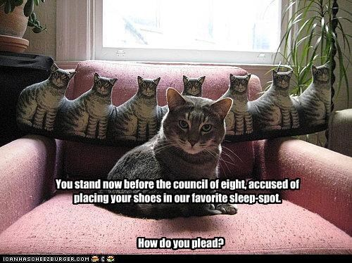You stand now before the council of eight, accused of placing your shoes in our favorite sleep-spot.