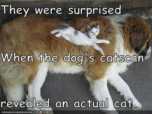 They were surprised When the dog's catscan revealed an actual cat