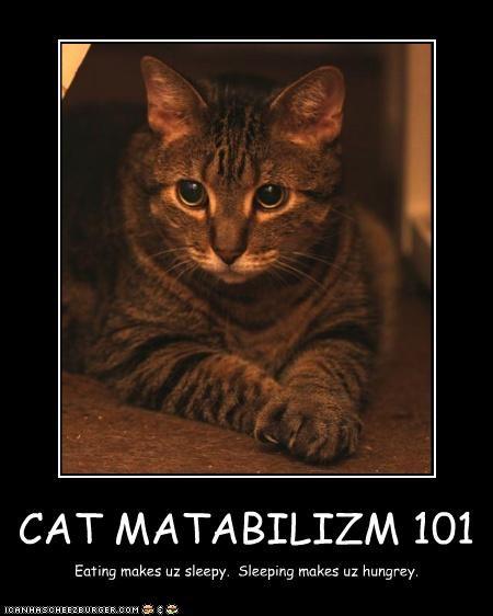 CAT MATABILIZM 101