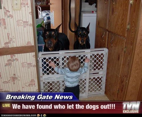 Breaking Gate News - We have found who let the dogs out!!!