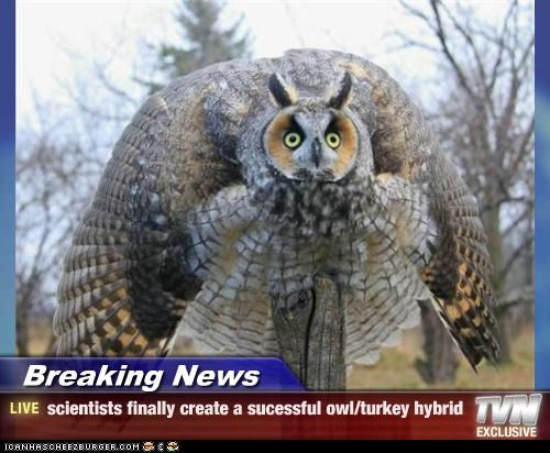 Breaking News - scientists finally create a sucessful owl/turkey hybrid